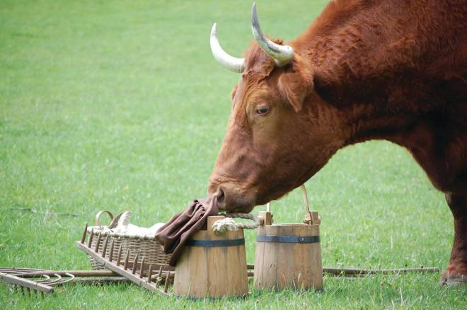 Learn about 18th century farming at Coggeshall Farm
