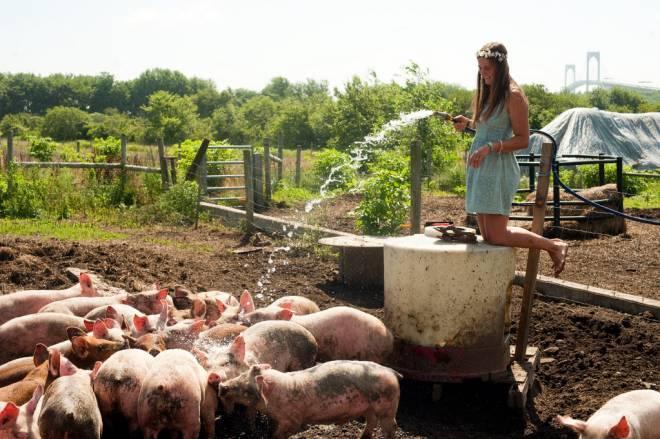 Windmist Farm