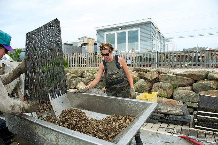 Tour (and taste) your way through Matunuck Oyster Farm in South Kingstown