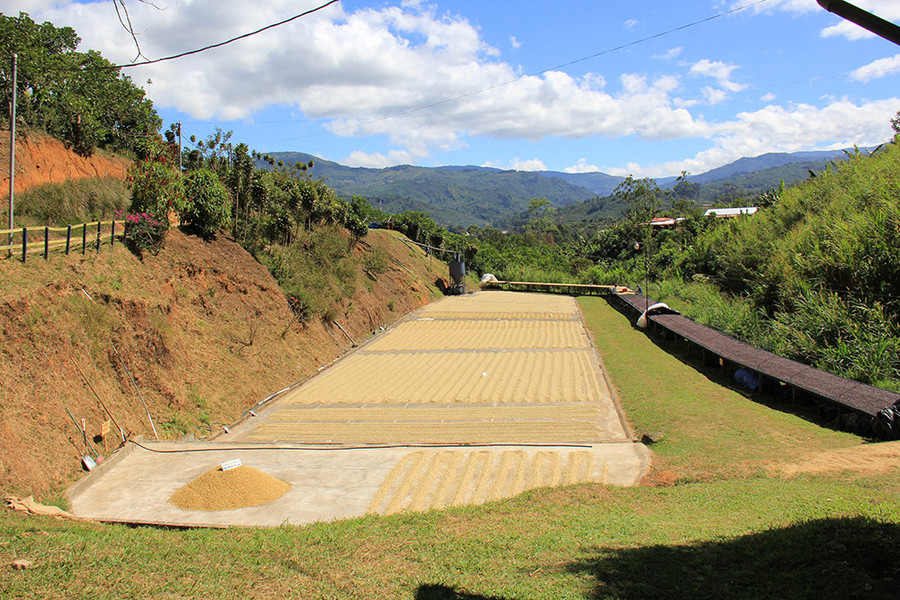 Every year, Starbucks takes select employees on an Origin Trip to learn where Starbucks coffee truly comes from. Here are scenes from coffee harvesting in Costa Rica: green coffee drying on patios, coffee cherries ripening on the tree, and harvested coffee cherries awaiting processing.