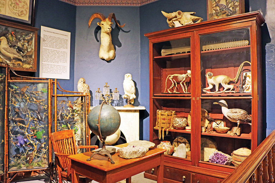 Explore the mysteries of the Museum of Natural History in Roger Williams Park
