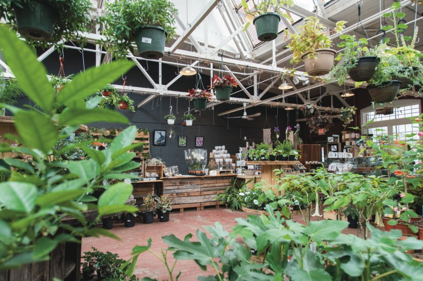 Experience a breath of fresh air and a lush eden of plants in Jordan's Jungle's tropical showroom