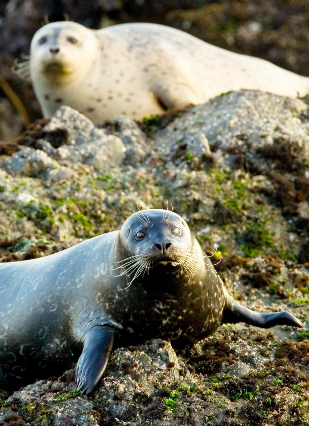 Early spring is the perfect time to witness cold-weather loving seals in their natural habitat