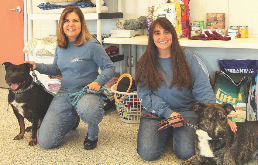 From left, SUFA's President Lina O'Leary and Executive Director Deb Turrisi with Bruno, a pit bull mix, and Stoli, a brindle mix.