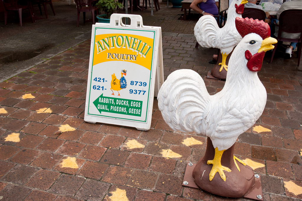 Antonelli Poultry, one of the daytime businesses that hearkens back to the old days of Providence's Little Italy