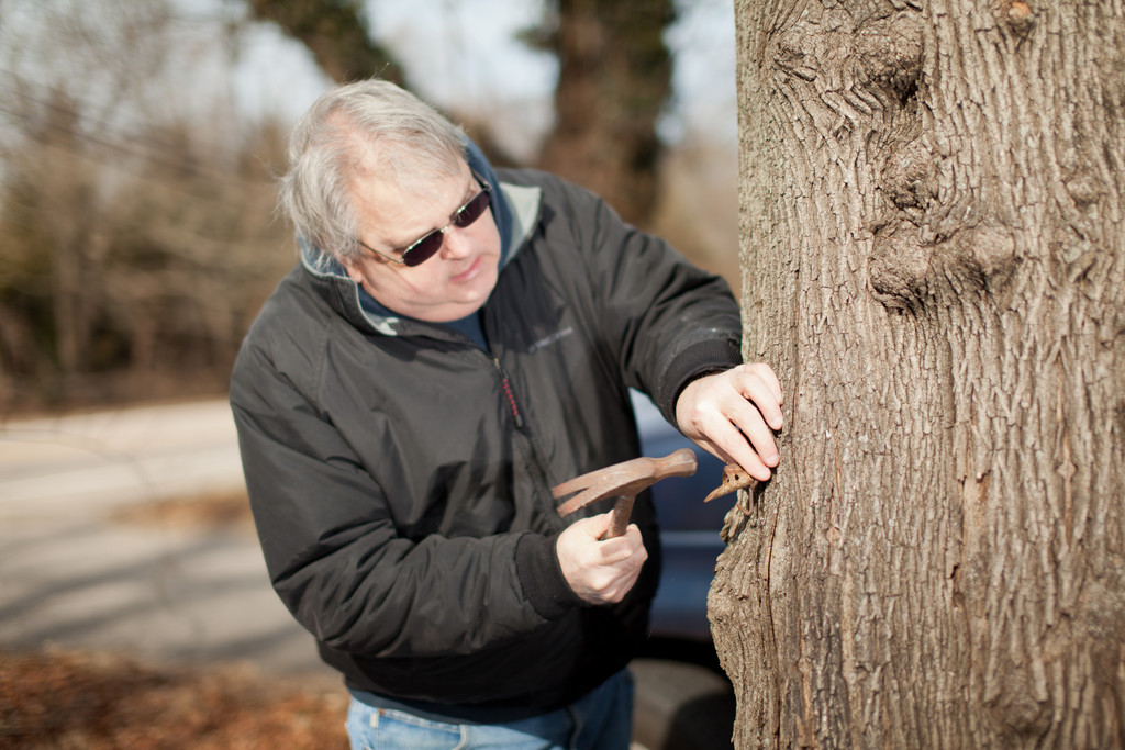 Tapping the trees at Kingston Syrup