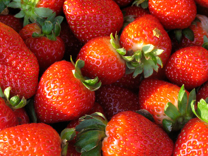 Little Compton's Young Family Farm hosts a Strawberry Fest on June 24