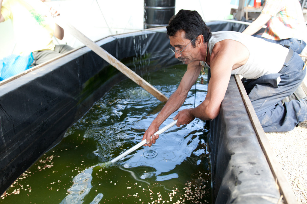 NUF uses an innovative aquaculture system to breed fish and grow plants