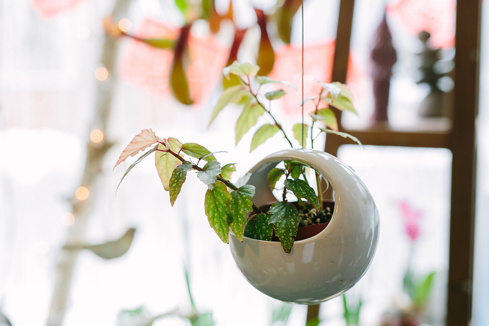 Hanging potted plant $40