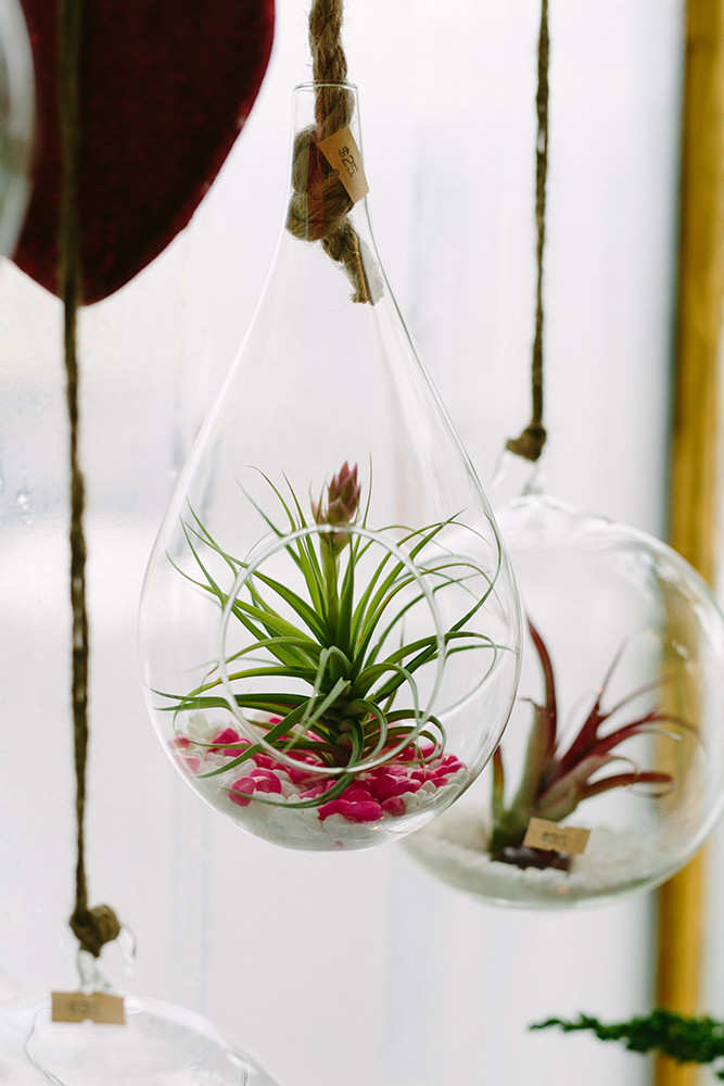 Air plants, small $25 and