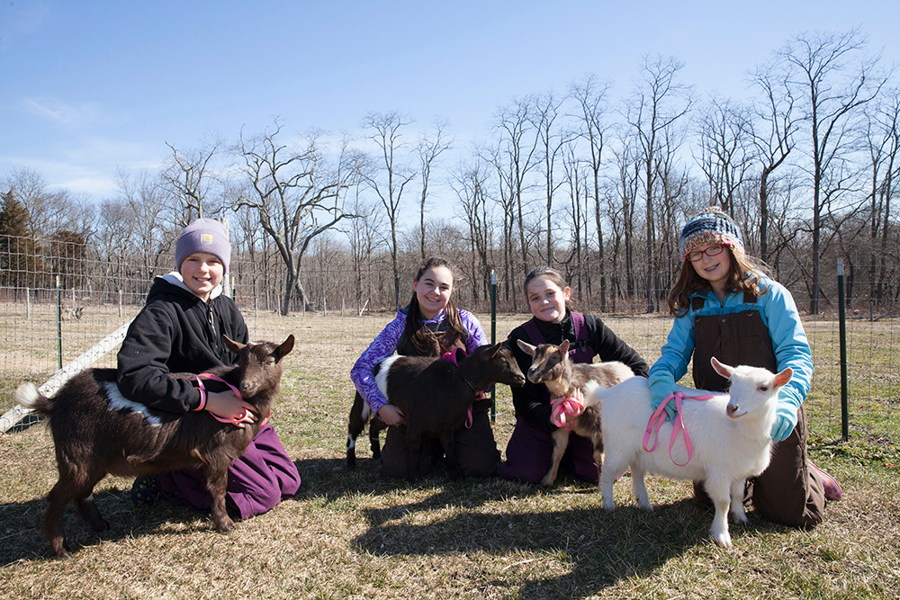 4H Clubs at Mount Hope Farms
