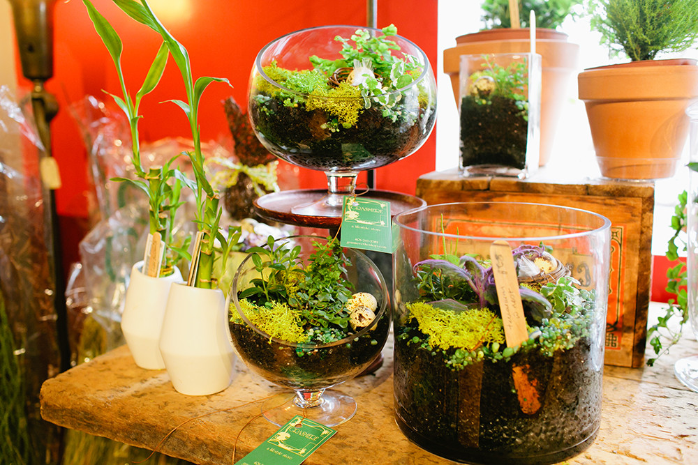 Live all natural terrariums $65 small, $92 large