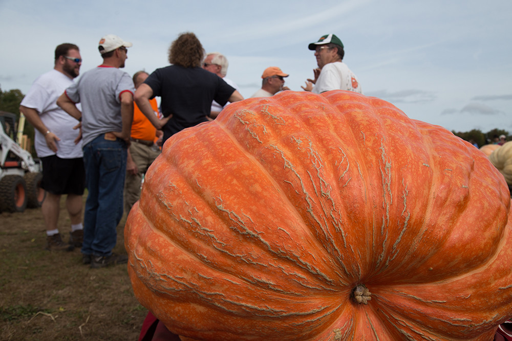 The annual Southern New England Giant Pumpkin Growers Annual Weigh Off has seen world records set and broken throughout its 18 year history