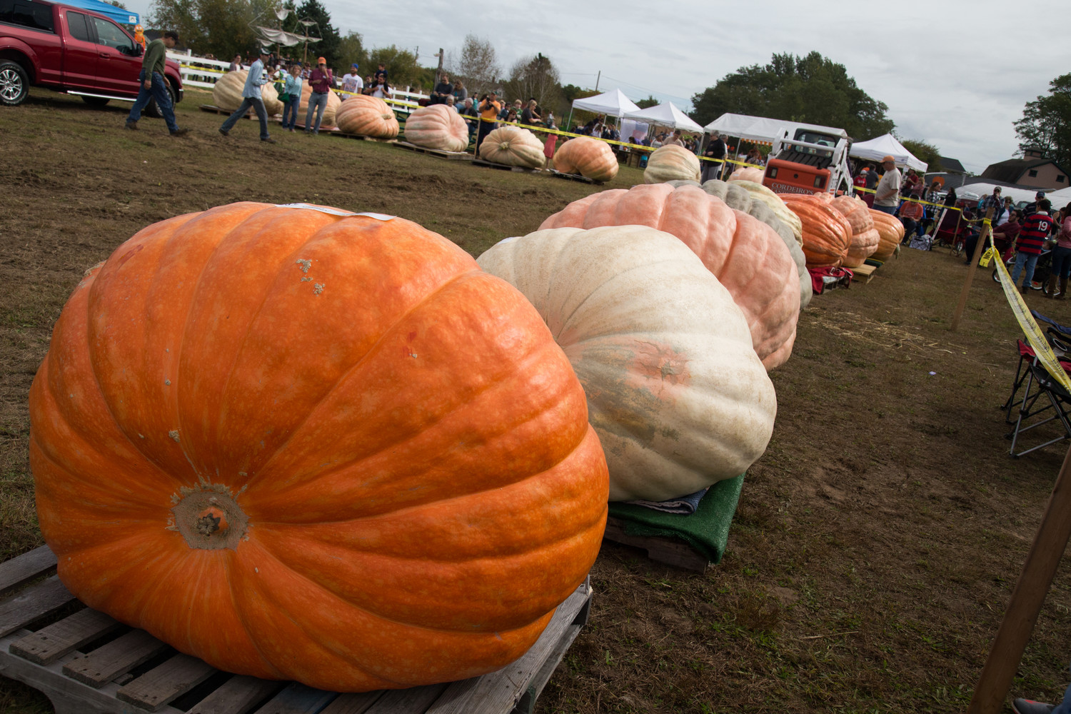 The famously giant pumpkins return to Frerichs Farm's for the annual Pumpkin Weigh-Off, October 6