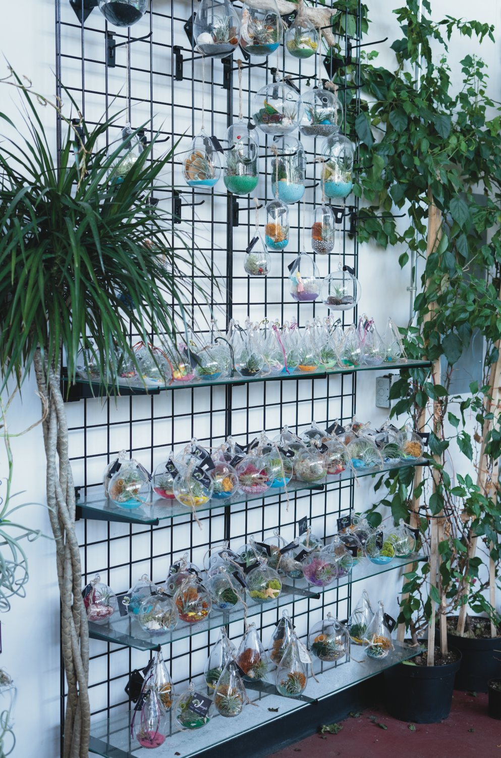 Find and take home your own air plant, a low-stress green addition to your home.