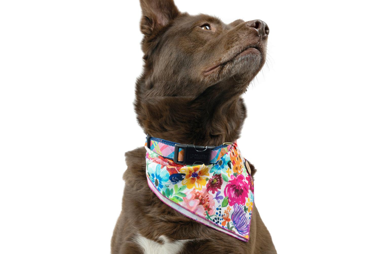 Cotton Dog Bandana, Lush Floral: $20 Etsy: WolfeAndHoundCompany, @wolfeandhoundcompany  |  Pink Madras Dog Collar: $23, UpCountryInc.com, @upcountryinc