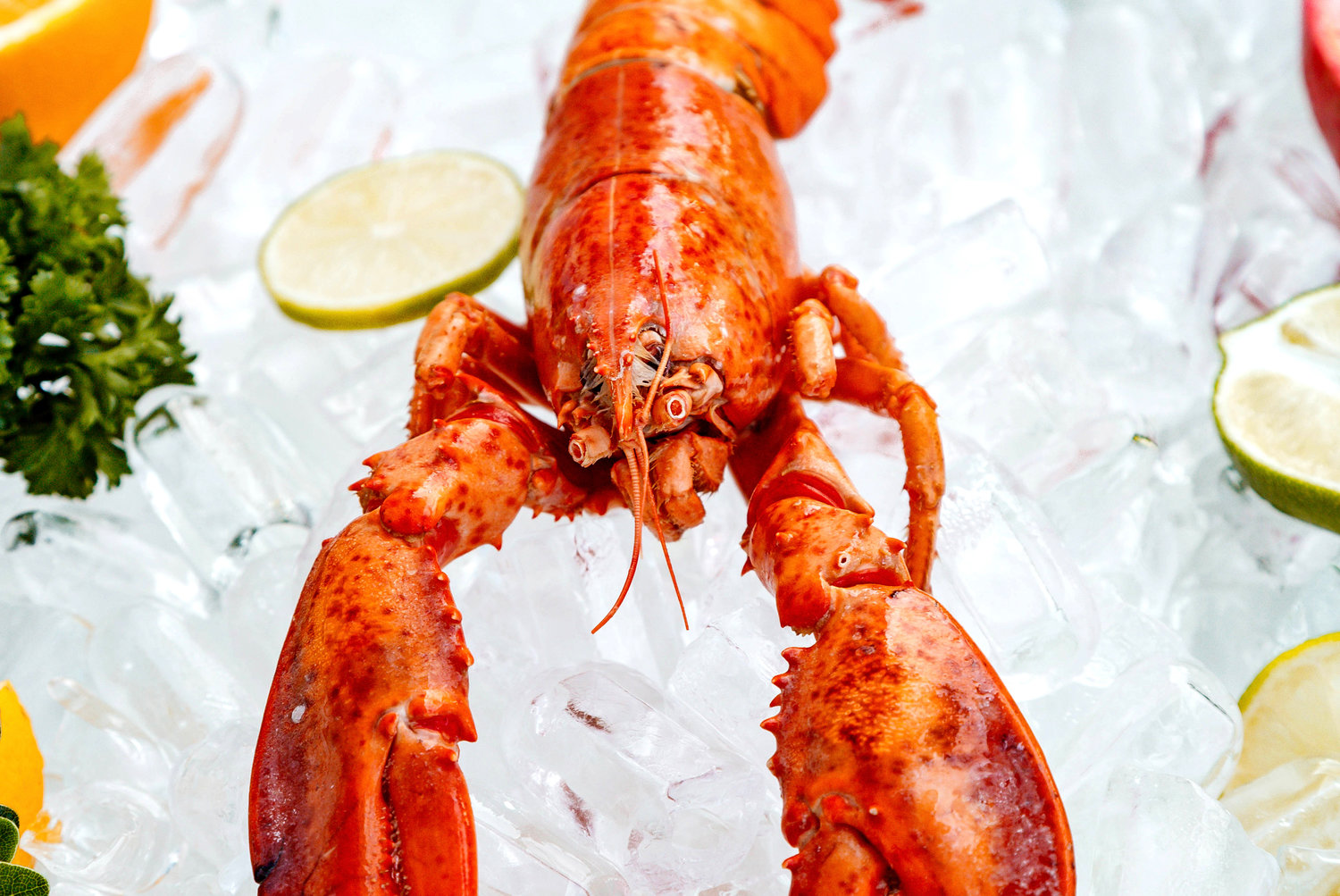 Nothing says summer in New England quite like the first lobster