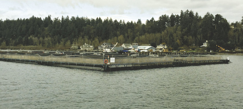 View from the water of a commercial fish farm near Bainbridge Island. Photo by Jessica Payne, Department of Ecology