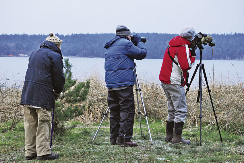 Dick Johnson (left), Jerry Gilbert and Paula Vanderheul scope a flock of about 20 common mergansers Dec. 17 from Irondale Beach Park by Chimacum Creek. Photo courtesy Artemis Celt