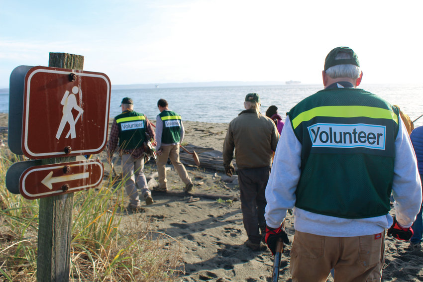 The Friends of Fort Worden's trail team hits the beach to pull out invasive dune grass.