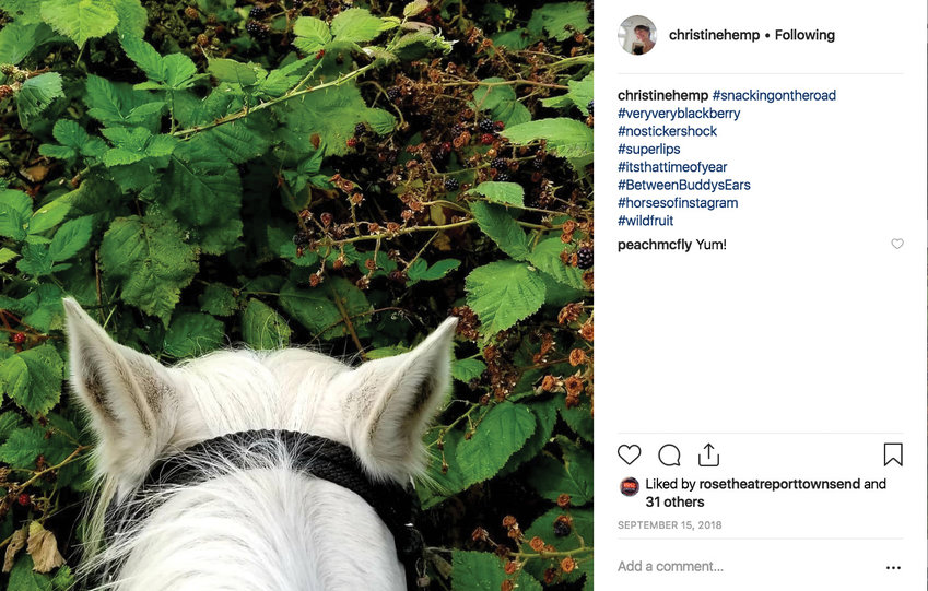#BetweenBuddysEars. Poet Christine Hemp began exploring the evolution of language while writing whimsical hashtags on her social media photos of her horse, Buddy.