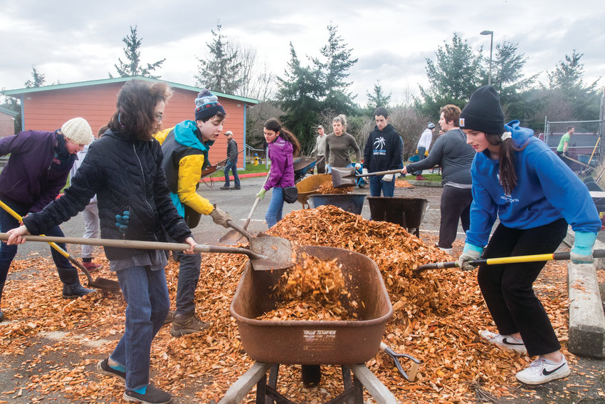 Students shovel Alder wood chips into wheelbarrows to be taken to the orchard and spread over cow manure.