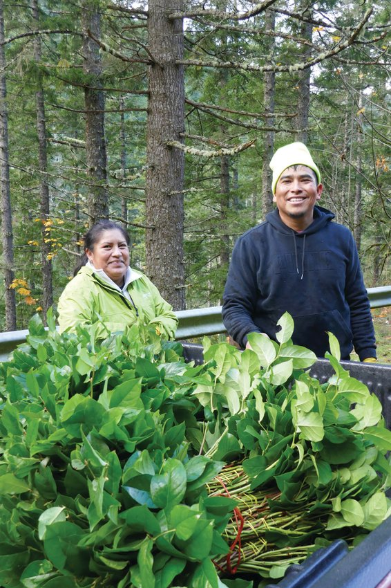 Juana and Hugo with the day's harvest of salal.
