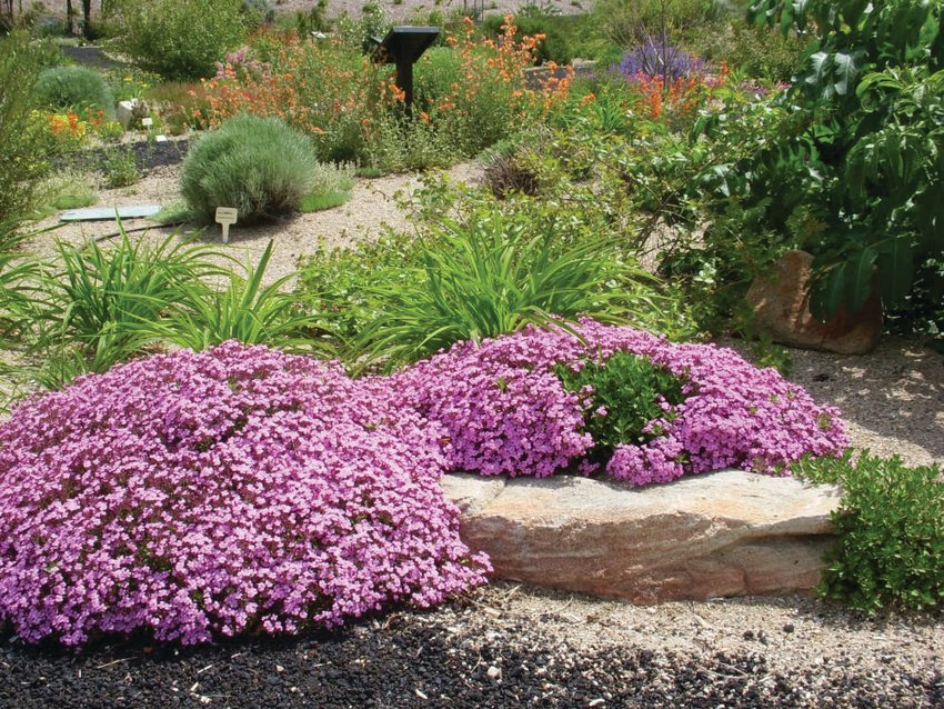 Creating defensible space and selecting fire-resistant plants can be part of your overall garden plan.
