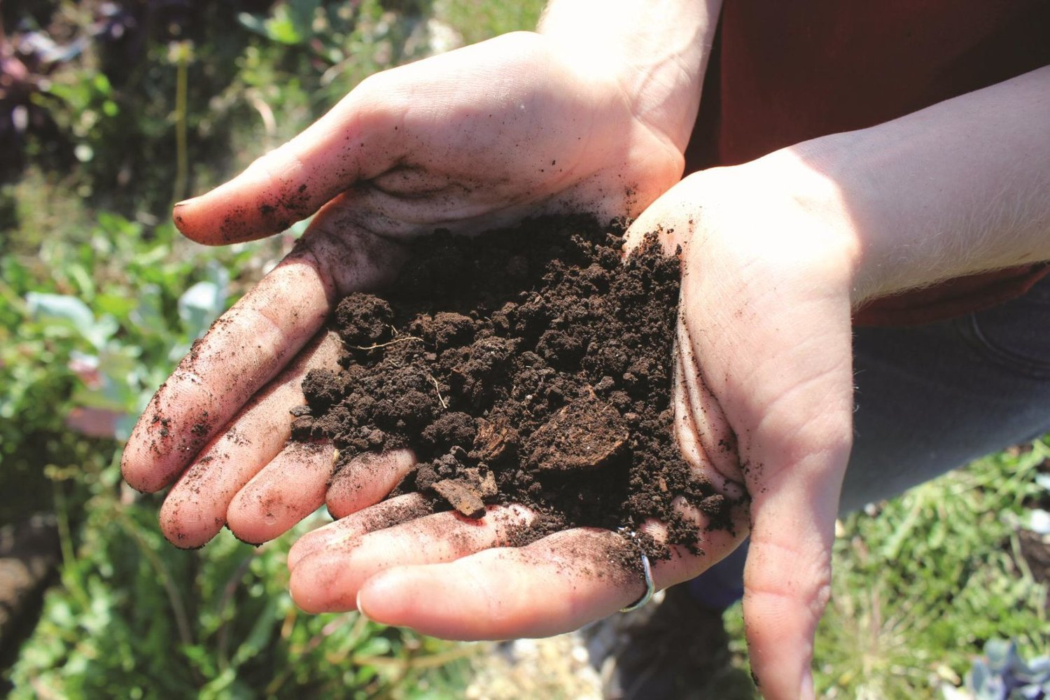 The soil in Chimacum is rich with beneficial bacteria, fungi, worms, beetles, and hundreds of other organisms.