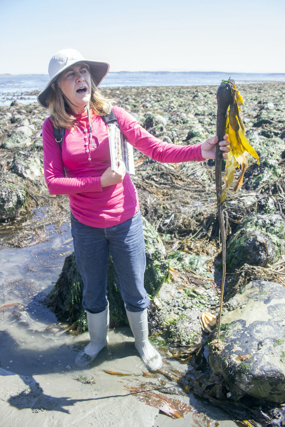 Wendy Feltham holds up a bull kelp, one of the hundreds of varieties of seaweed that can be found locally, during her July 15 intertidal walk just north of Battery Kinzie at Fort Worden State Park.