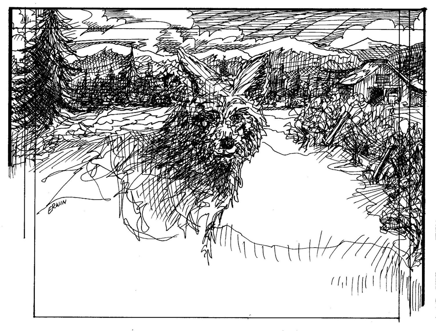 Earthquake Season And Out Of Context Coyote Drawing Port Townsend