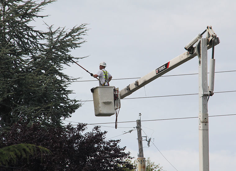Jefferson County Public Utility District crews are pruning trees away from electrical lines in Port Townsend, hoping to stem the tide of future tree-related outages. People with questions about when the crews might reach their neighborhood may call the PUD at 360-302-0467. Photo by Patrick Sullivan