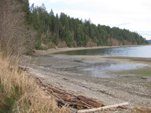 This photo shows the shoreline along Tarboo-Dabob Bay, a portion of which was recently acquired from Taylor Shellfish Farms by DNR as an addition to the Dabob Bay Natural Area. Courtesy photo by Northwest Watershed Institute