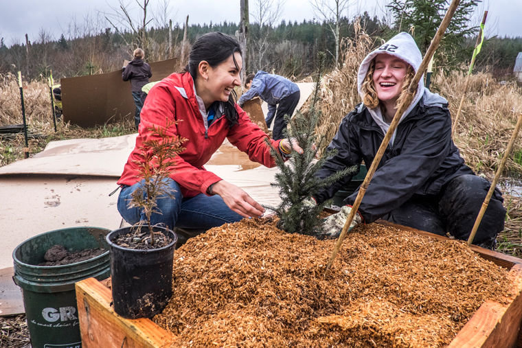 "Youth crew leaders Anda Yoshina (left) and Nicola Pieper, both students at the Chimacum Pi Program, worked together to install trees in a ""planter box"" designed to mimic the role of nurse logs in wetland conditions. Photo by Charles Espey"