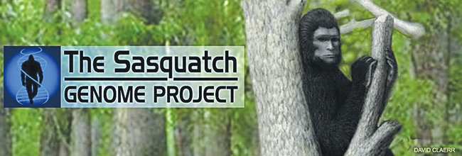 The mystery of whether Bigfoot, otherwise known as Sasquatch, could exist is taken a step further by Sasquatch Genome Project that includes evidence from the Olympic Peninsula that was gathered by a Jefferson County resident. This is the project's banner, with artwork by David Claerr.