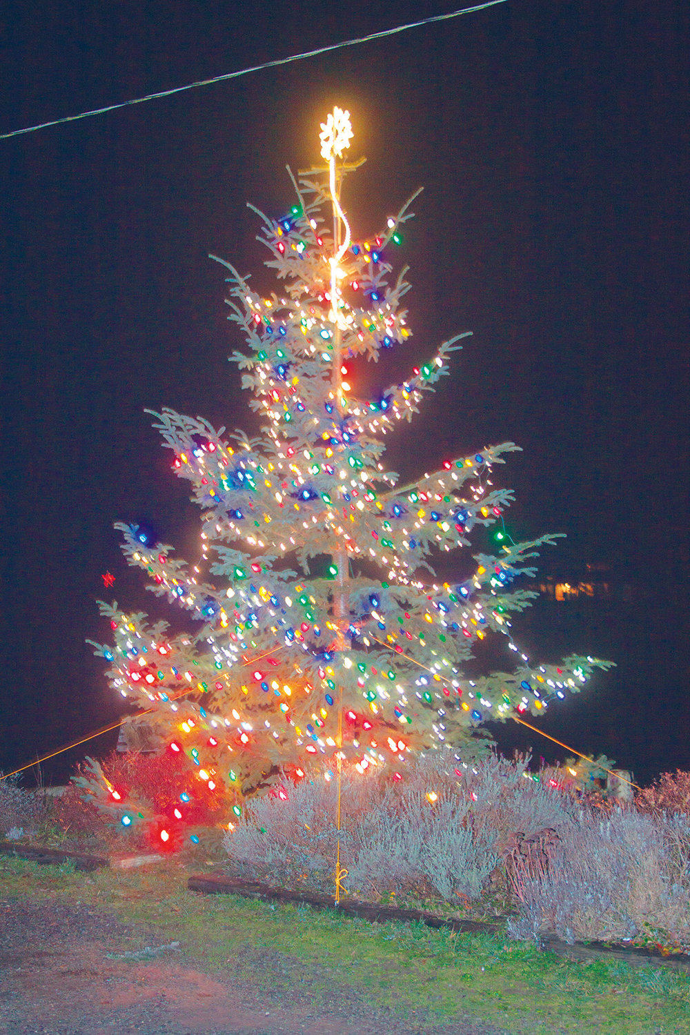 The Christmas tree is lit up across the street from the Nordland General Store on the evening of Dec. 1.