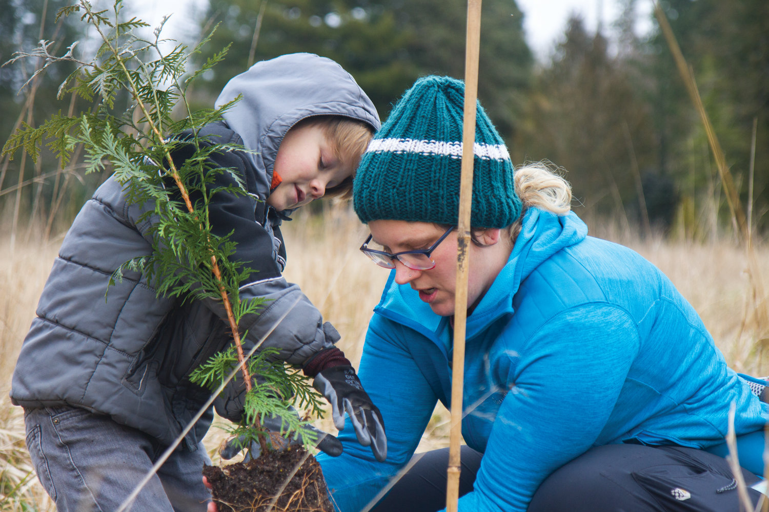 Brighton Stafford and Andrea Stafford work together to plant a cedar sapling at the 13th annual Plant-A-Thon hosted by the Northwest Watershed Institute near Quilcene.