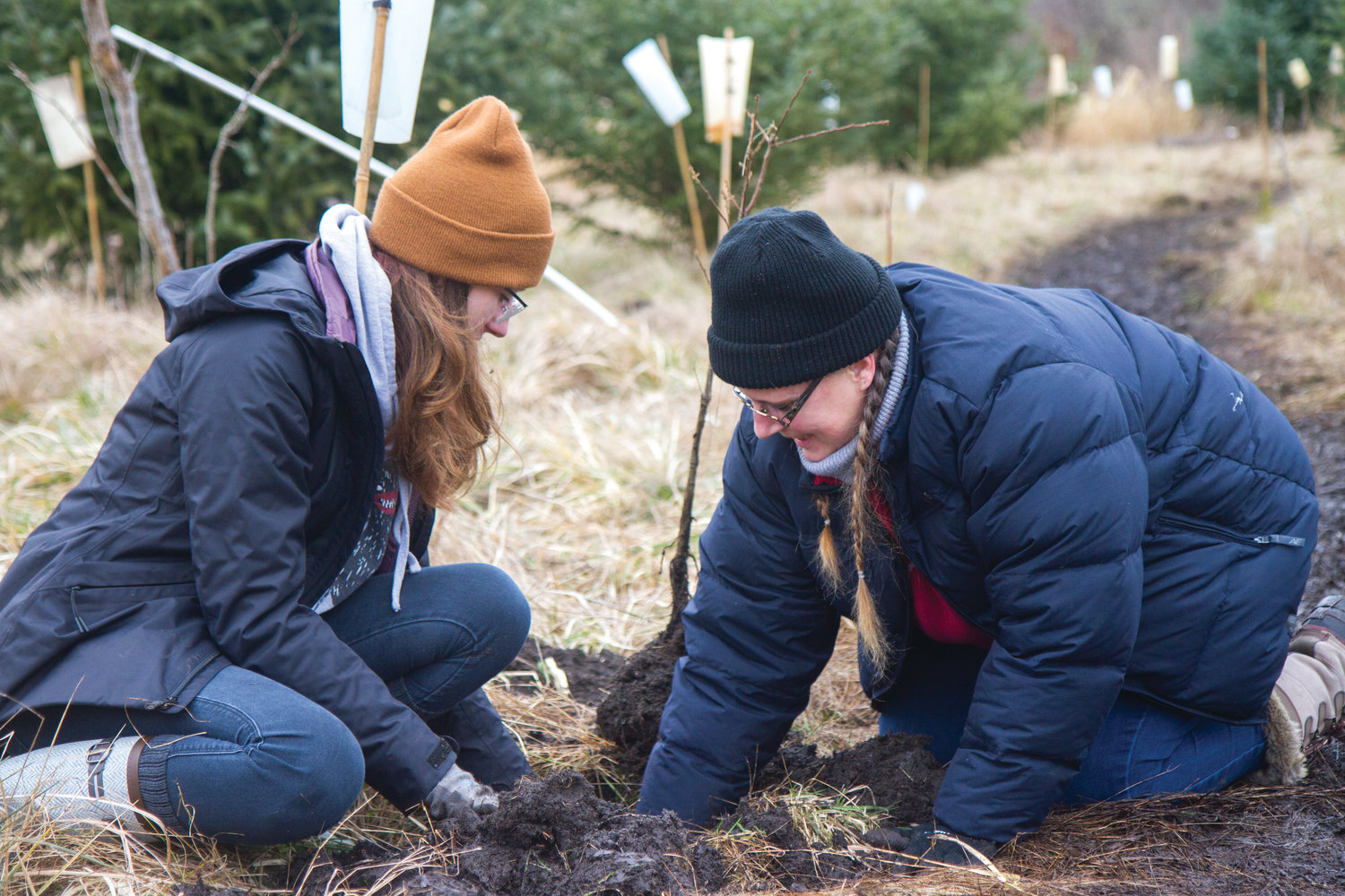 Karyn Hulse, left, and Krystan Hampton were not afraid to get muddy while planting saplings at the Plant-A-Thon.