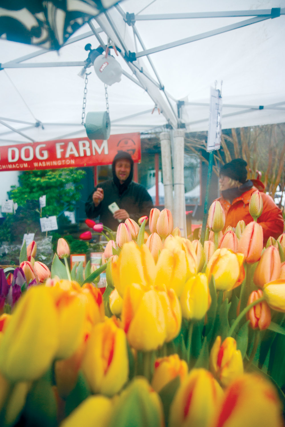 Red Dog Farm sold buckets of the tulips they grow at their farm in Chimacum, making the grey day just a bit more colorful.
