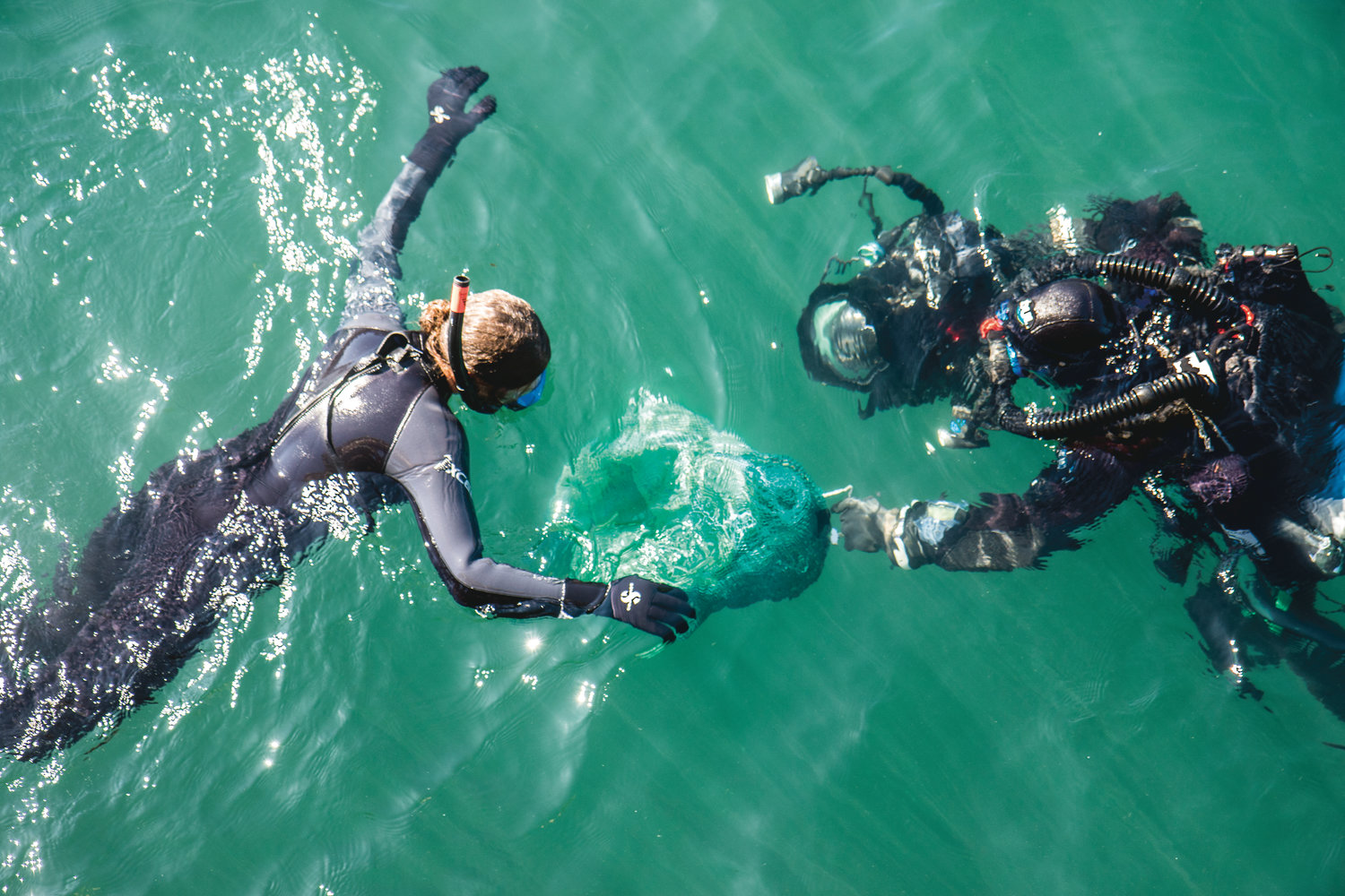 Ali Redman hands off Eleanora, the Giant Pacific Octopus to Florian Graner who is suited up in full diving gear to take her to a den on the seafloor, where they hope she will continue to live.