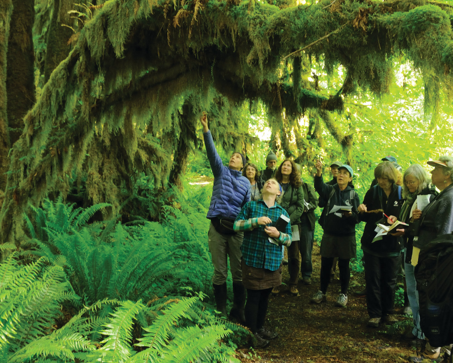 "In the past, Harding has led a nature walk for Jefferson Land Trust's annual ""Tidelands to Timberlines"" course. While walking alone in the same forest to take photos for her virtual nature walk, she said she felt the lack of people was indicative of the times we live in."