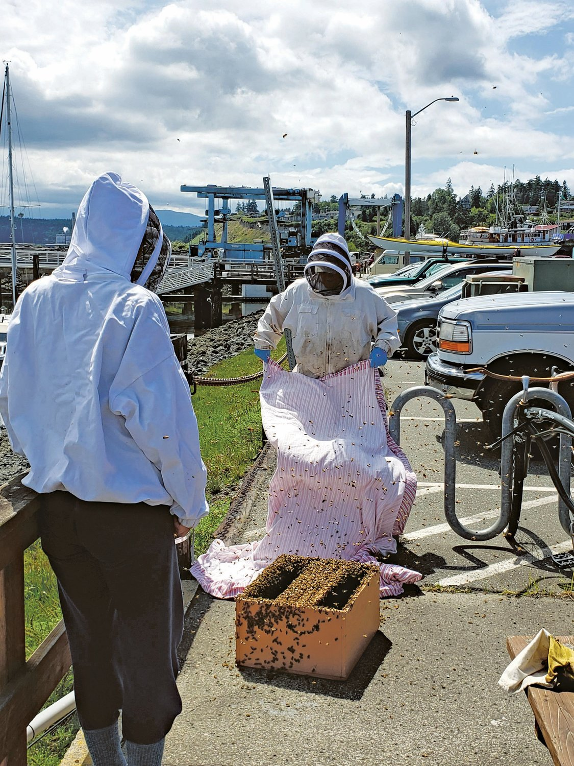 A pair of beekeepers works to relocate a swarm of bees that descended on the picnic area at the Boat Haven Wednesday, June 24.