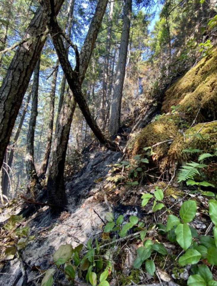 Firefighters cautiously monitor smoldering understory in