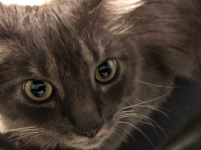 Harvey is waiting to meet you at Rehoboth Animal Shelter.