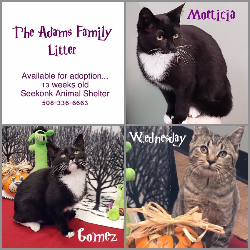 Come to Seekonk Animal Shelter to meet these cuties!