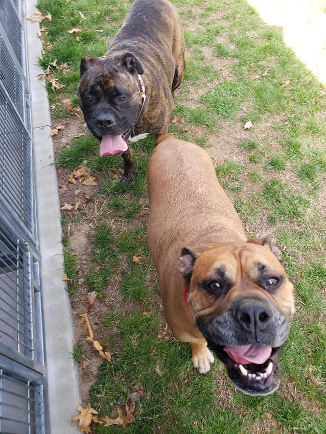 Cosmo and Mabel would like to be adopted together.  Call the Seekonk Animal Shelter if you can give them a home.