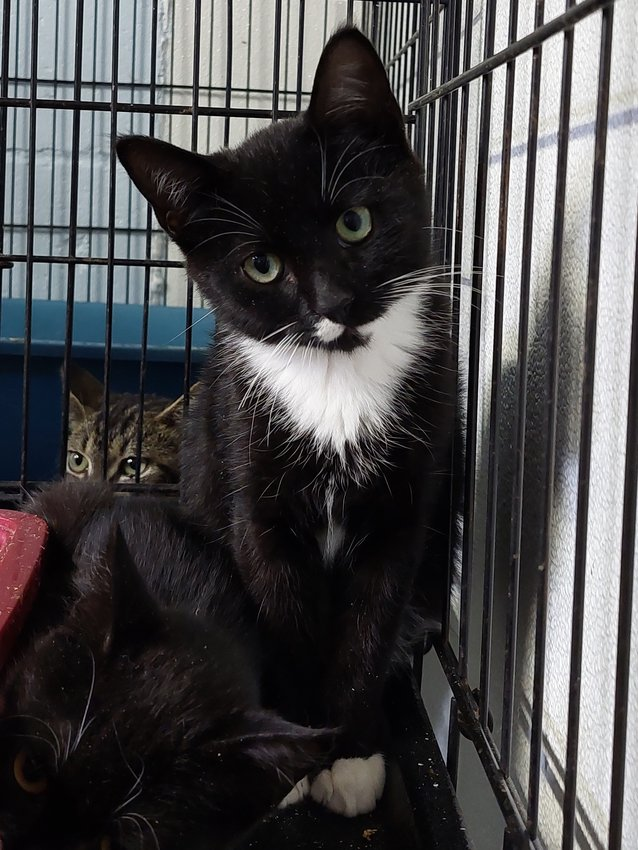 This is Banjo, he is waiting to meet his new family at the Rehoboth Animal Shelter.