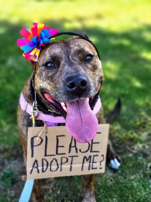 Rhonda is waiting for her forever home at Seekonk Animal Shelter.