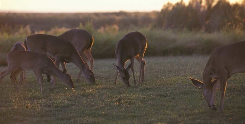 """The special late season, called """"sausage season"""" by some, ended Jan. 21 in the North Zone, but will be open Jan. 22- Feb. 4 in the South Zone, only for antlerless deer or bucks with at least one unbranched antler. It's a good time to shoot for your freezer, and for wise game management population control."""