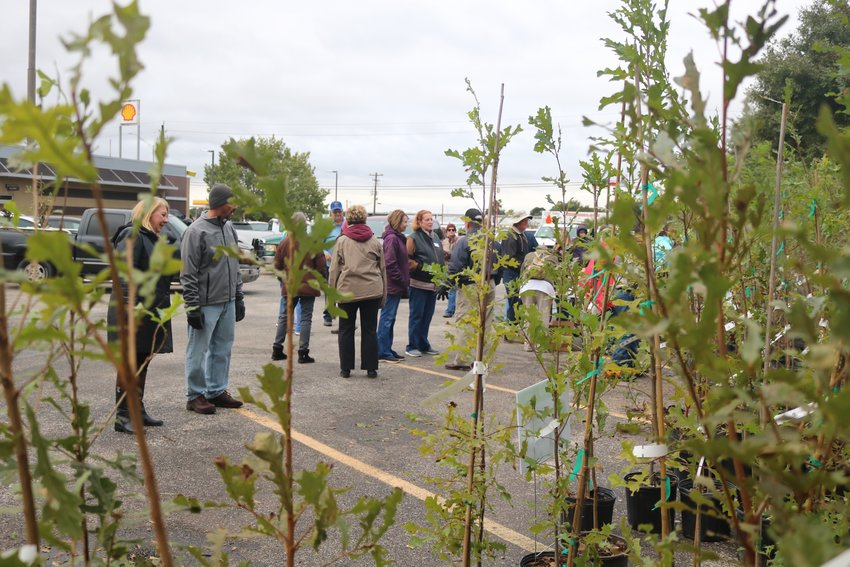 Residents and volunteers mingle Friday while selected from 500 trees given away at the Sealy American Legion Hall. The Arbor Day Foundation, International Paper, and the Bluebonnet Master Gardeners Association gave away 500 trees as part of the Community Tree Recovery Program to help replace trees lost or damaged during recent floods.